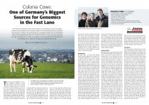 Article Colonia Holsteins