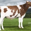OH DG Rubels-Red | #1 GTPI R&W sire in the breed! (04/19)