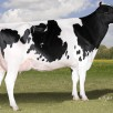 Sherona-Hill Angel VG-89-USA 2yr.