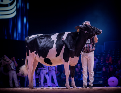 Close family: H.Tobias AM Solomon Adena - Junior Champion Swiss Expo 2020