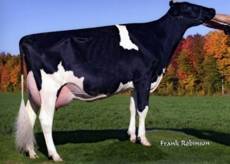 Comestar Goldwyn Lava VG-87-CAN 2yr. | Full sister to dam and dam to Lavaman @ Semex