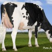 Rainyridge Super Beth *RC VG-86-CAN 2yr.