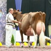 KHW Regiment Apple Red EX-96-USA @ Madison