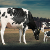 Dam: JK Eder DG Esmeralda EX-90-NL EX-92-MS | Beautiness from any angle!