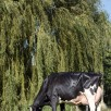 Carf Emeraude EX-91-NL @ Almost 8 years old