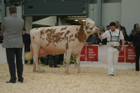 Sterndale Talent Jodie EX-93-UK 5yr.