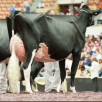 Butz-Butler Gold Barbara EX-95-USA