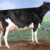 dam: MS Gold Brooke EX-91-USA