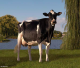 Scientific Debutante Rae *RC EX-92-USA