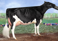 MS Gold Barbara Brooke EX-91-USA